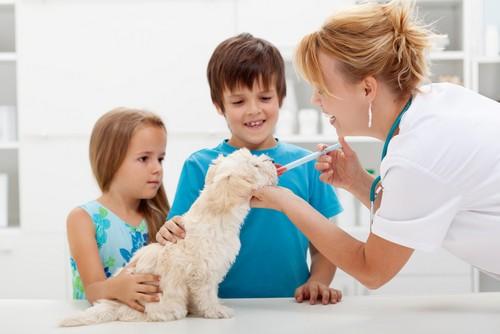 Vaccinations Washington, PA